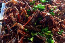 5 Manfaat belalang goreng untuk kecantikan dan kesehatan