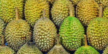 10 Jenis durian yang ada di Indonesia, banyak dicari orang
