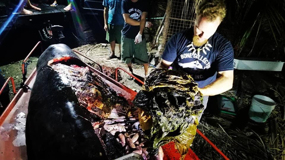 Paus perutnya berisi 40 ton sampah © 2019 brilio.net