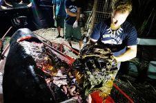 Lagi paus mati mengenaskan, di perutnya berisi 40 kg sampah