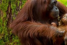Visit the Heart of Borneo kampanyekan ekowisata di Kalimantan