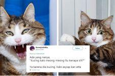 10 Cuitan lucu jawaban kenapa kucing mengeong ini kocak abis