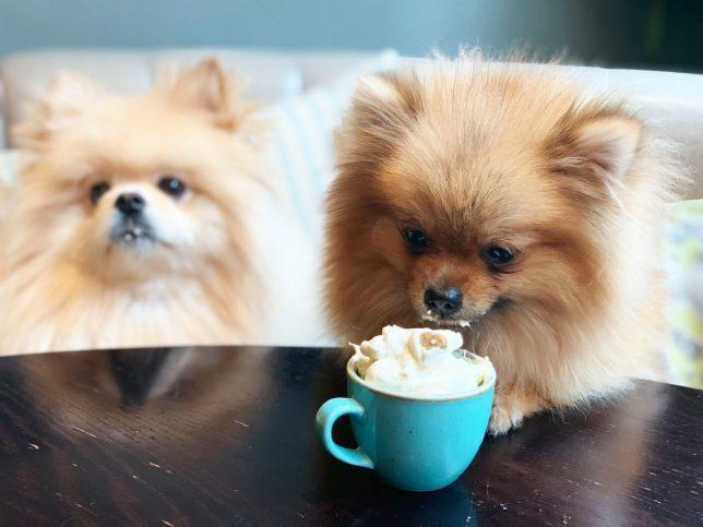 Kafe spesial cuma buat anjing, cocok untuk pecinta binatang