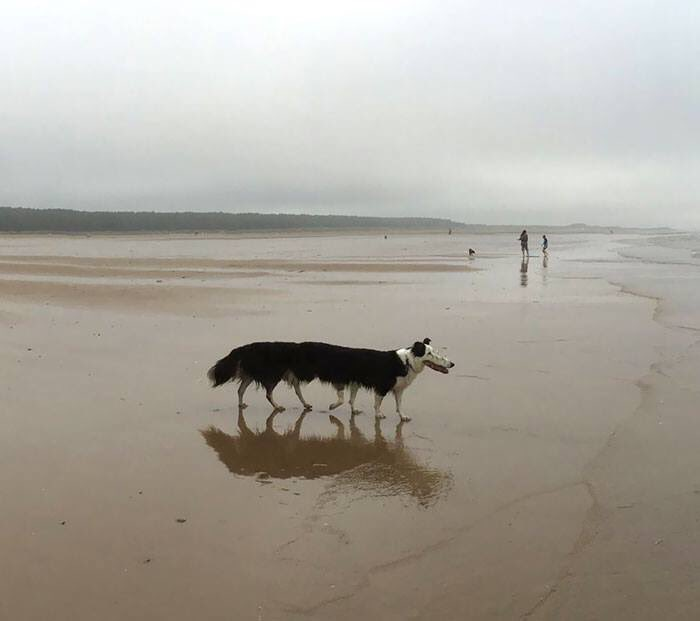 anjing di panorama © 2019 brilio.net
