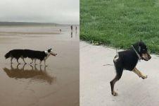10 Foto anjing gagal dipotret pakai mode panorama ini kocak
