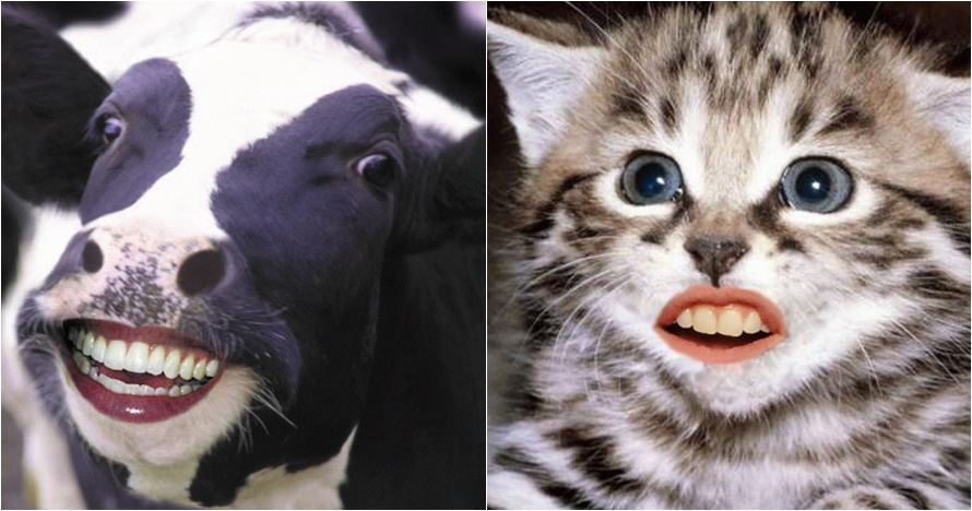 10 Foto editan hewan punya gigi mirip manusia, bikin geli