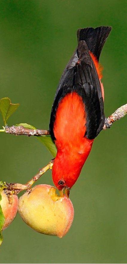 burung termahal di dunia © 2019 brilio.net