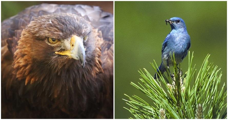 9 Burung termahal di dunia, ada yang Rp 90 miliar