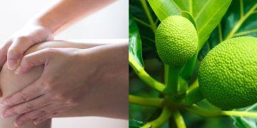 10 Manfaat sukun untuk kesehatan, ampuh mengatasi asam urat