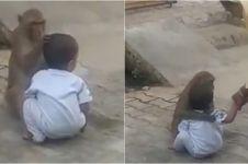 Balita usia 2 tahun diculik monyet, diperlakukan bak anak sendiri