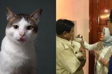 Mengenal Bobby, kucing Prabowo yang dibawa jenguk Sandiaga