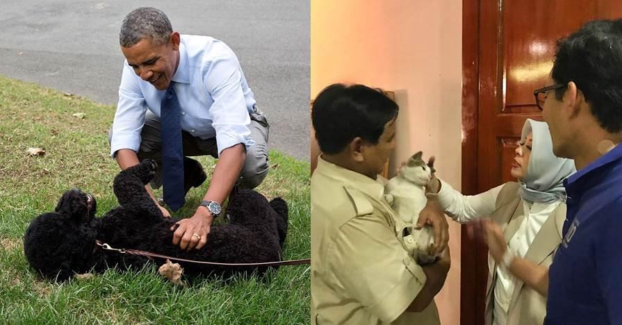 5 Hewan peliharaan politisi, dari kucing sampai sapi
