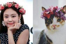 8 Cocoklogi Jennie Blackpink dengan kucing ini bikin gemas