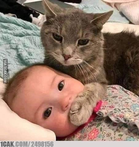 kucing dan hooman © 2019 berbagai sumber