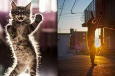 15 Aksi kucing 'ngedance' ini bikin gemas