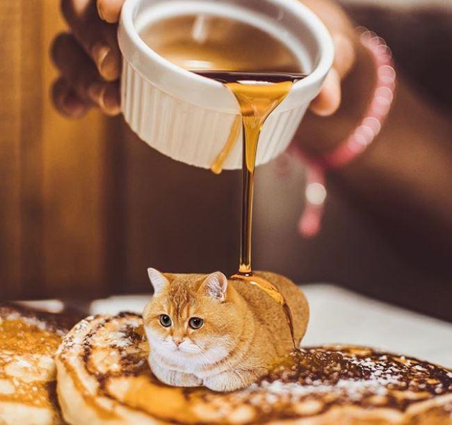kucing imut dalam makanan © 2019 brilio.net