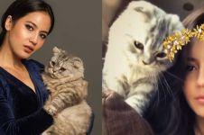 10 Potret Pevita Pearce bareng kucing kesayangannya, bikin gemas!