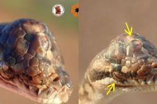 Fakta-fakta ular bermata tiga ini kagetkan para ilmuwan