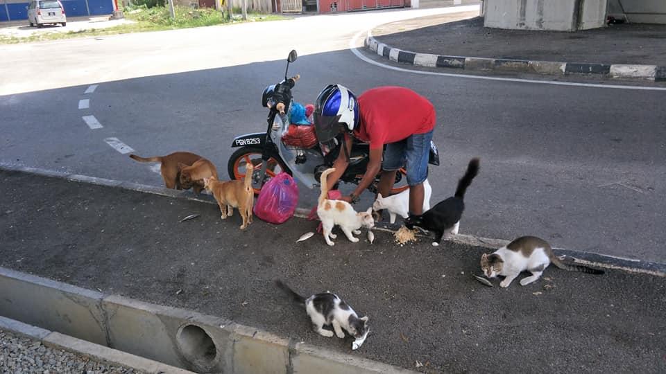 juru parkir beri makan hewan © 2019 brilio.net