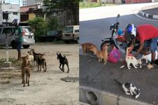 Juru parkir ini habiskan gajinya beri makan anjing & kucing liar