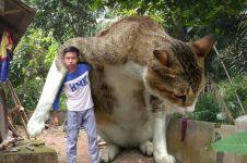 Editan foto jika kucing jadi raksasa ini kocak banget