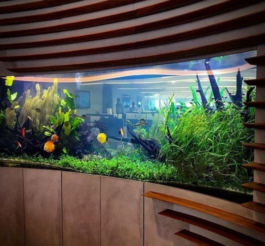 Desain akuarium yang bisa mempercantik ruangan istimewa