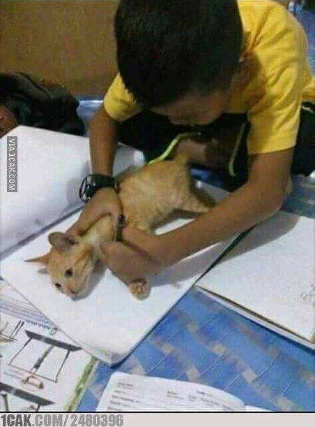 kerjasama dengan kucing © 2019 berbagai sumber