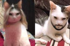 12 Potret kucing pakai Snapchat swap gender, bikin tepuk jidat