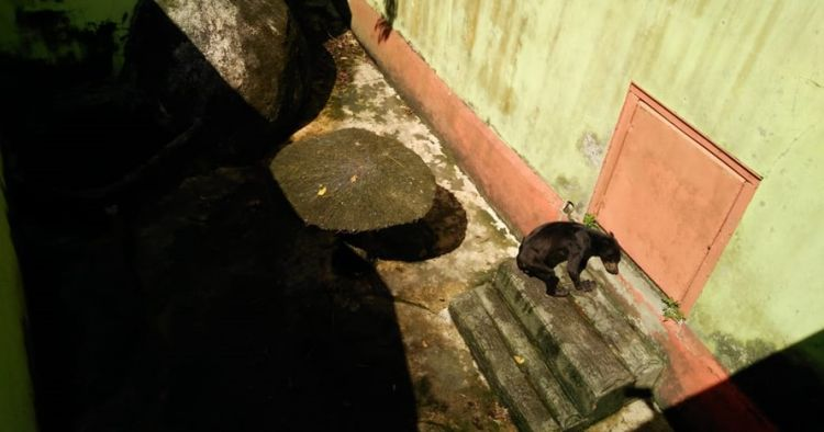 Viral beruang madu di Singkawang, kondisi tubuhnya jadi sorotan
