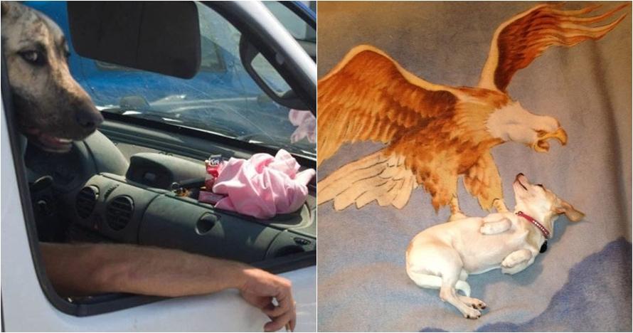 10 Momen kebetulan hewan tertangkap kamera, bikin lihat dua kali