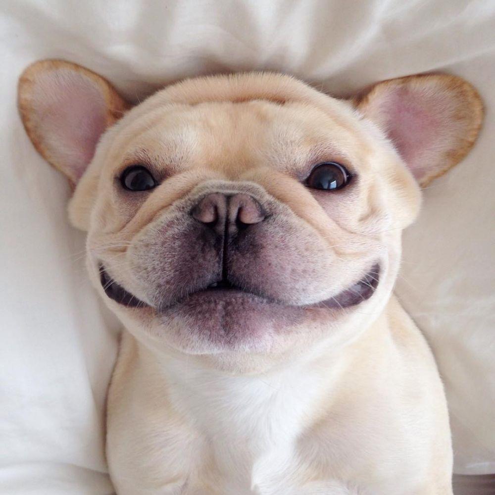 gaya anjing selfie ini bikin gemas  istimewa