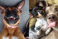 Bak manusia, 9 gaya anjing selfie ini bikin gemas