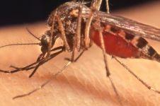 Nyamuk nggak menggigit sembarang orang, begini penjelasannya