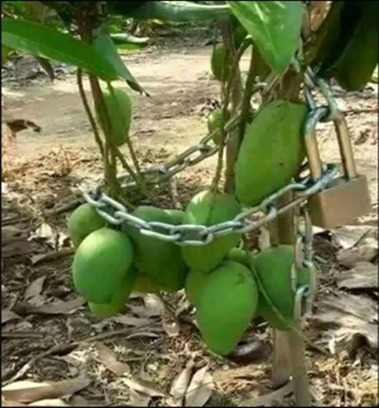 cara amankan buah © 2019 brilio.net