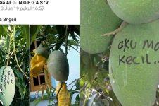 8 Cara lucu buah agar nggak dicuri ini bikin tepuk jidat