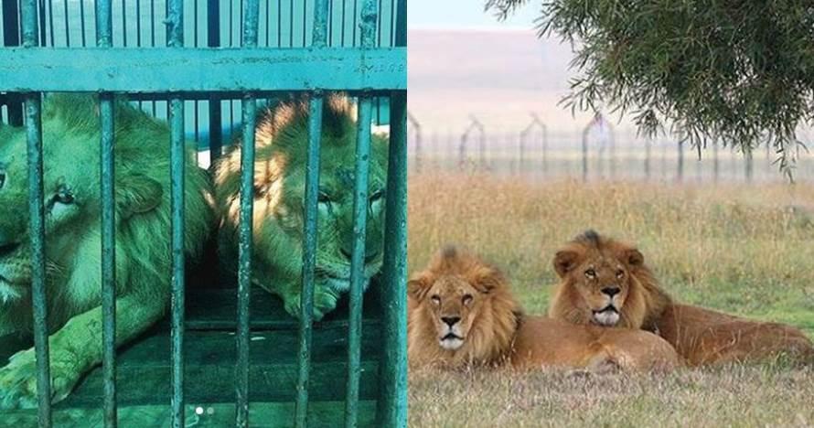 perbedaan kondisi hewan sirkus  © 2019 brilio.net
