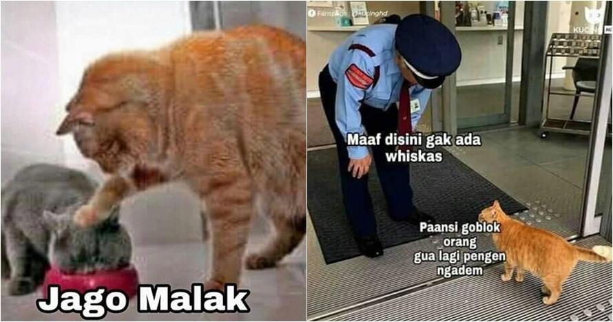 10 Meme lucu Kocheng Oren, kucing bar-bar viral yang bikin ngakak