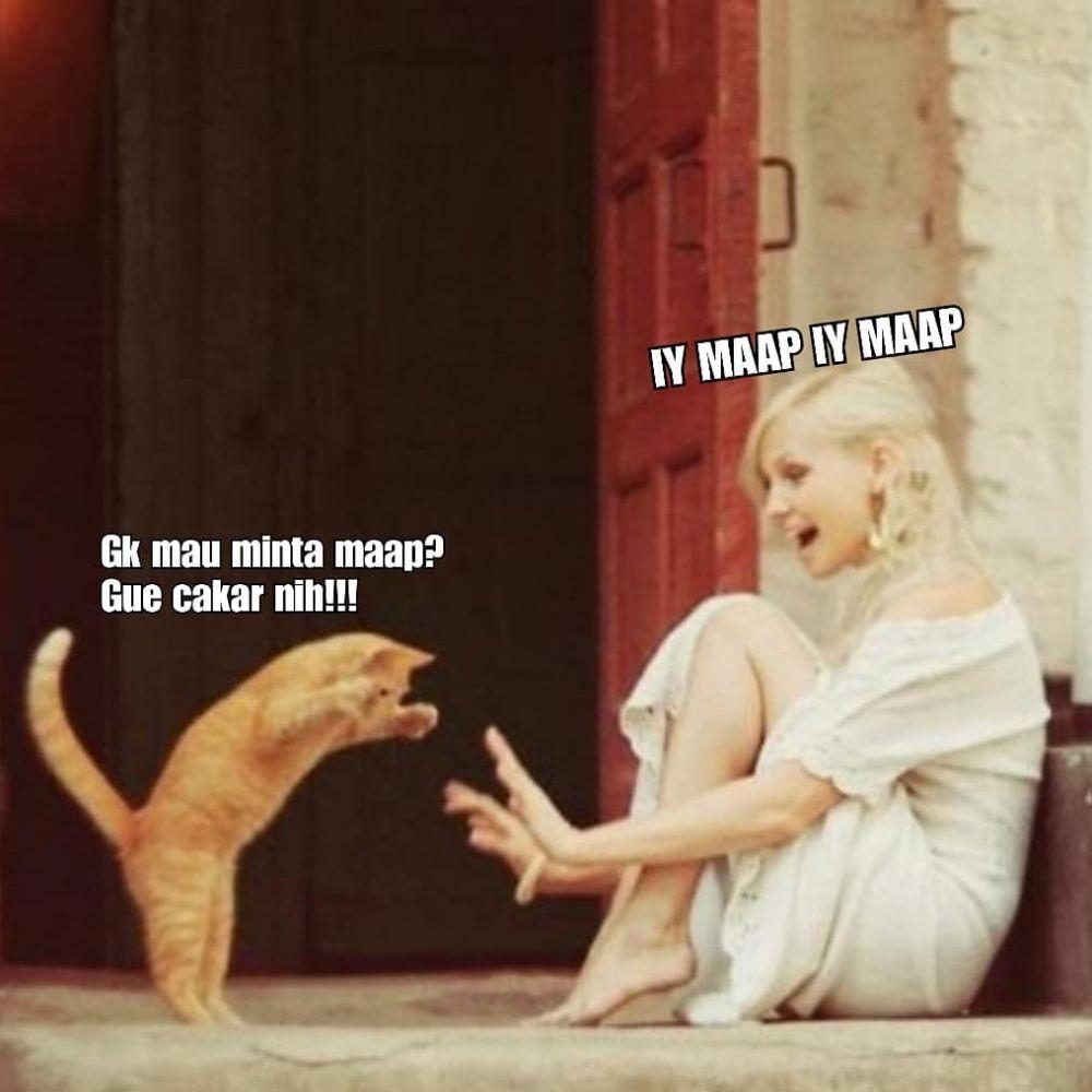 10 Meme Lucu Kocheng Oren Kucing Bar Bar Viral Yang Bikin