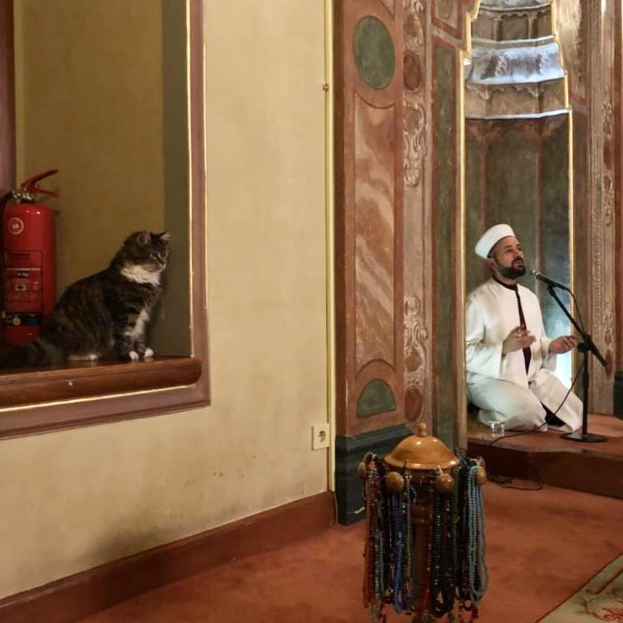 di masjid ini kucing tinggal berdampingan © Facebook