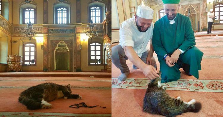 Di masjid ini kucing dibiarkan tinggal berdampingan dengan jamaah