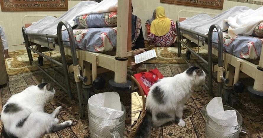 potret kucing temani majikannya meninggal © Twitter/@nuriyliamalek