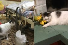Kisah kucing 'Messi' temani tuannya meninggal ini bikin ikutan sedih