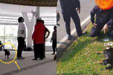 Sempat viral, anjing yang dibawa masuk masjid diduga mati tertabrak