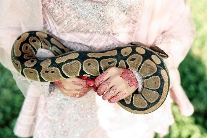 Pasangan pengantin ini pakai ular   © 2019 brilio.net