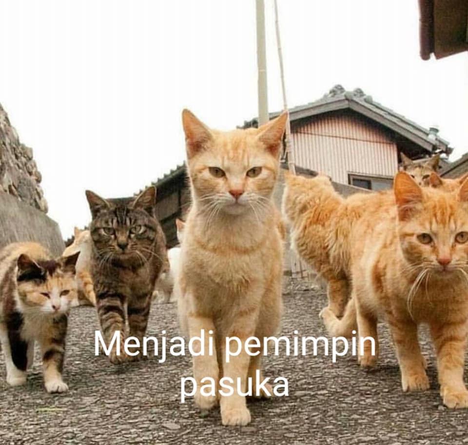 foto editan kehidupan koceng oren © Facebook/opanz.adie