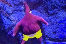 Tampak punya pantat, bintang laut ini mirip Patrick teman SpongeBob