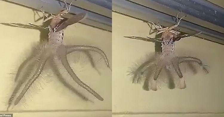 Heboh muncul hewan aneh di Bali, penampakannya disebut mirip alien