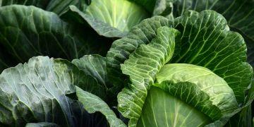15 Makanan untuk meredakan migrain, alami dan mudah didapat