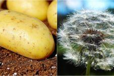11 Cara hilangkan kutil dengan bahan-bahan alami, mudah didapat