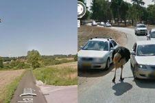 10 Momen hewan terekam Google Street View, bikin senyum tipis